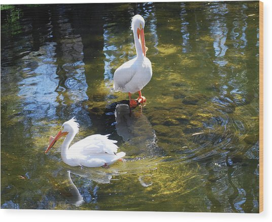 Summer White Pelican Wood Print