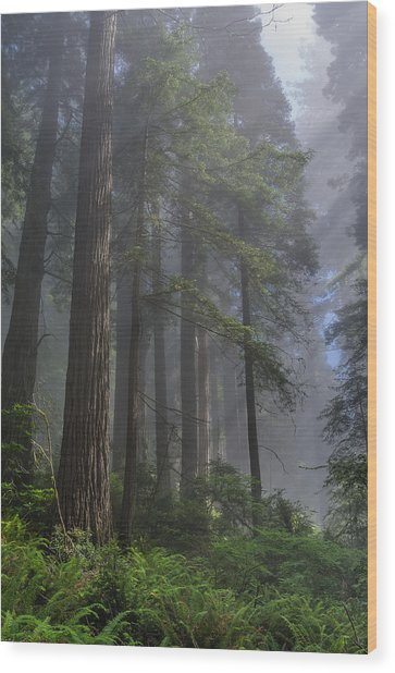 Sun Breaking On Redwoods Wood Print
