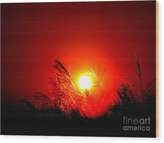 Sun Drop Wood Print by Laurence Oliver