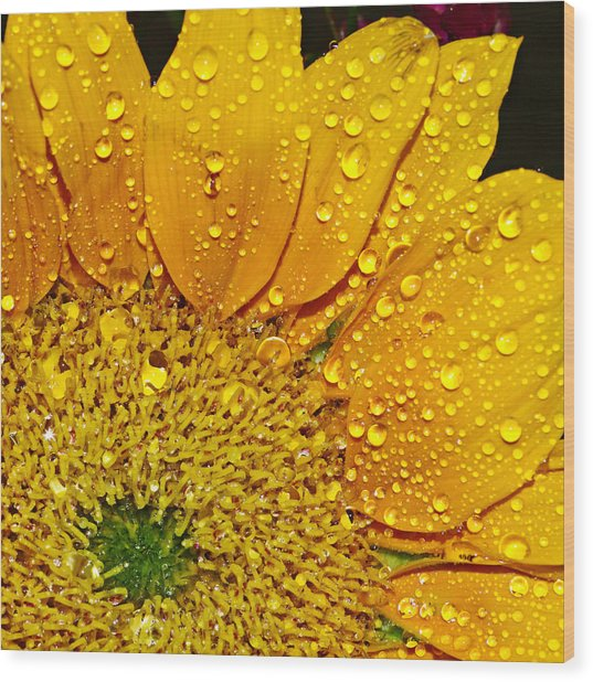 Sun Flower Wood Print by Michelle Armstrong