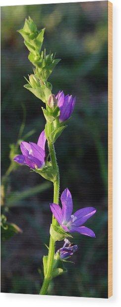 Sun Kissed Purple Wood Print