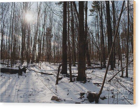 Sun On The Wild Turkey Trail Wood Print by Gary Chapple