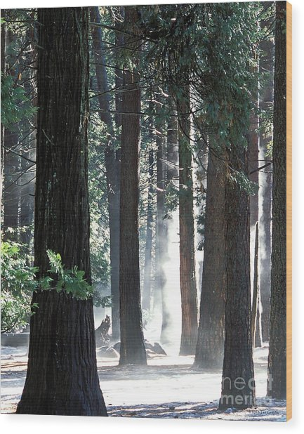 Sunbeams Through The Trees Yosemite National Park Color Wood Print