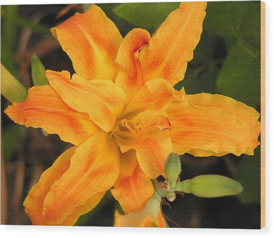 Sunburst Lilly Wood Print by Andrea Drake