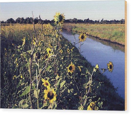 Sunflower Canal Wood Print by Eunice Olson