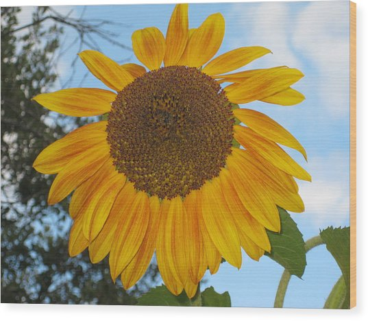 Sunflower Wood Print by Carolyn Reinhart
