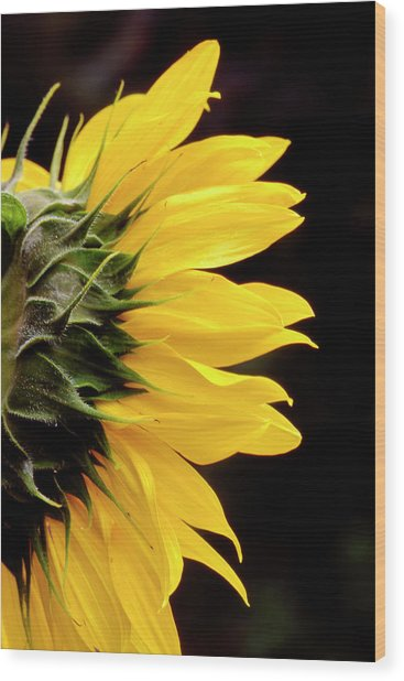 Sunflower From Side Wood Print
