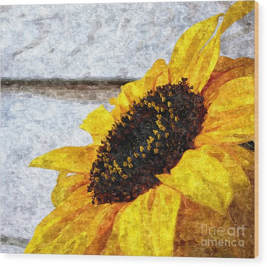 Sunflower Paint Wood Print by Slavi Begov