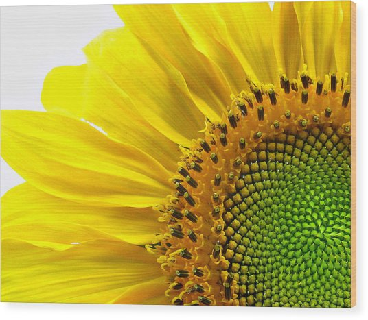 Sunflower Segments Wood Print
