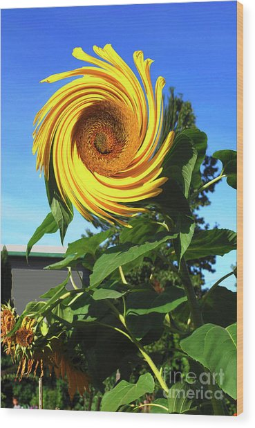 Sunflower Twirl Wood Print