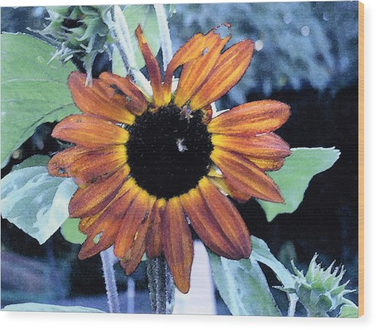 Sunflower With Bee Wood Print by Eunice Olson