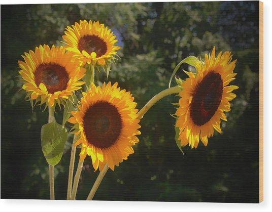 Sunflowers Wood Print by Boyd Alexander
