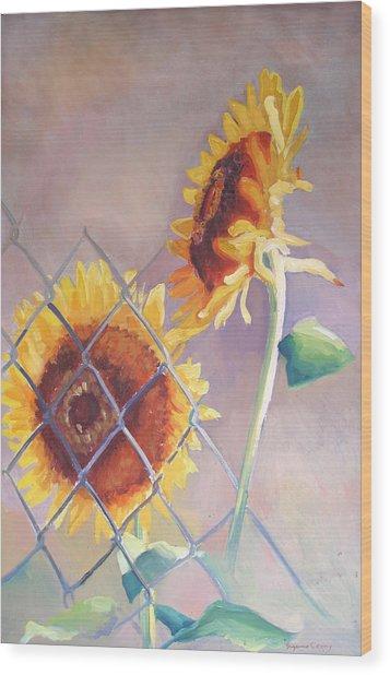 Sunflowers Fenced Wood Print