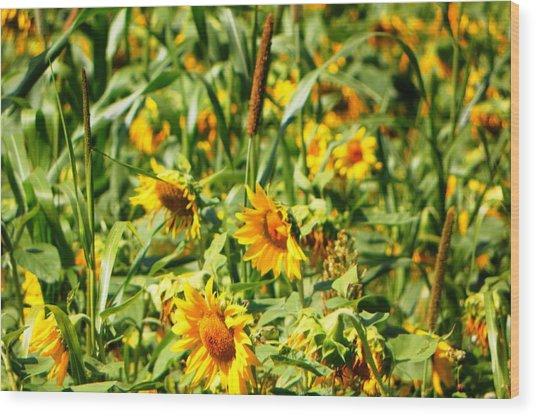 Sunflowers Wood Print by Jennifer Compton