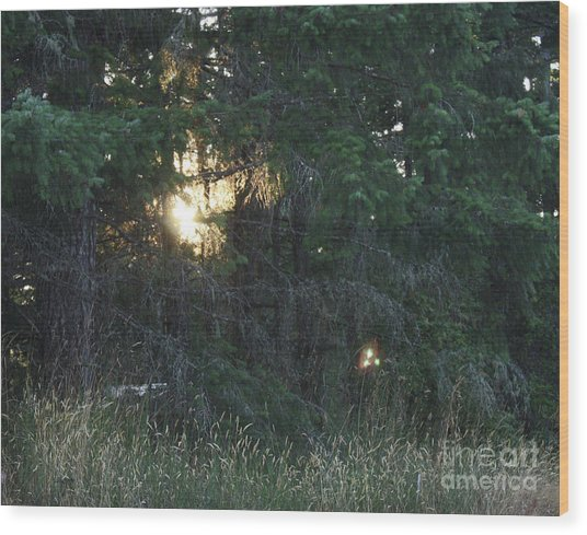 Sunlight Orbs 3 Wood Print by Jane Whyte