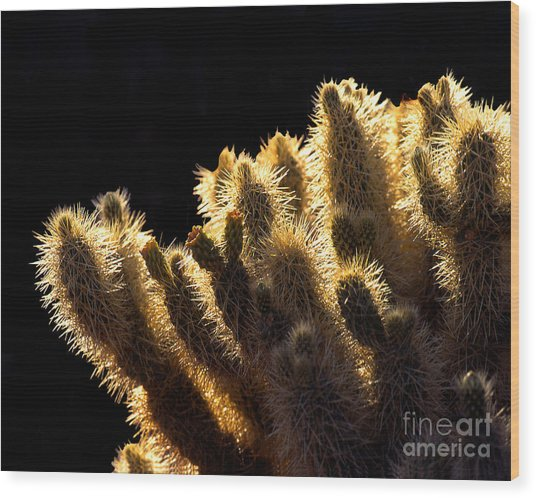Sunlit Cactus Wood Print by Barry Shaffer