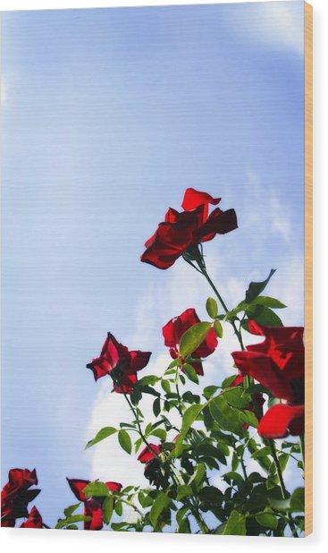 Sunlit Roses Wood Print by Alan Hausenflock