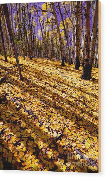 Sunny Aspen Day Wood Print