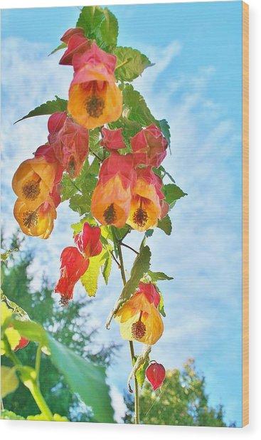 Sunny Bells Wood Print