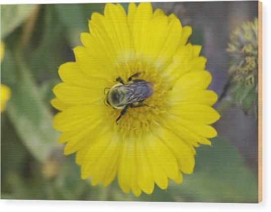 Sunny Bumblebee Wood Print