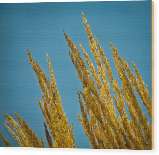 Sunny Golden Grass Wood Print