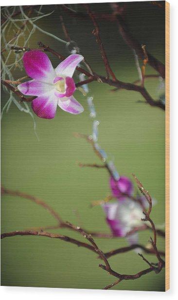 Sunny Orchid Wood Print by Brandon McNabb