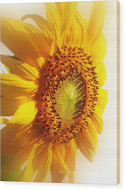 Sunny Softness Wood Print