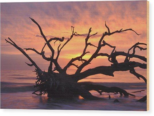 Sunrise At Driftwood Beach 6.1 Wood Print