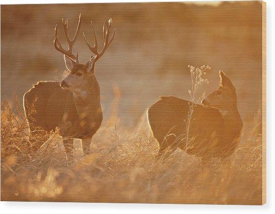 Sunrise Mule Deer Wood Print