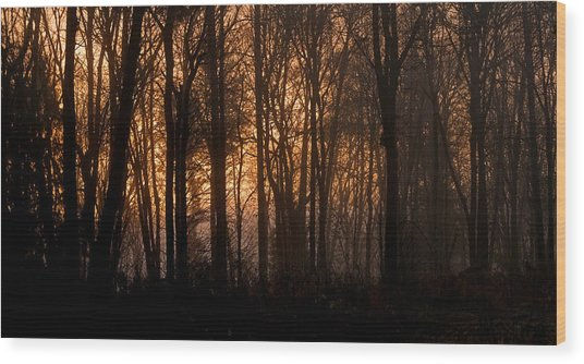 Sunrise Through Trees Wood Print by Shawn Zimmerman