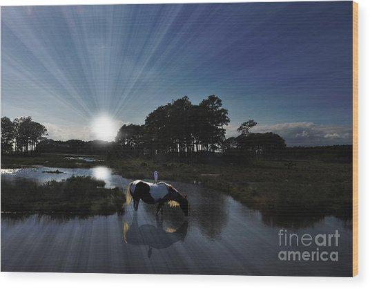 Sunset Assateague Island With Wild Horse Wood Print