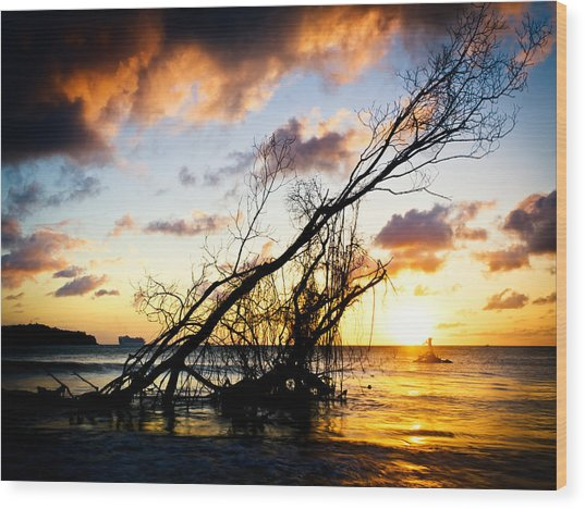 Sunset Drift Wood 2 Wood Print