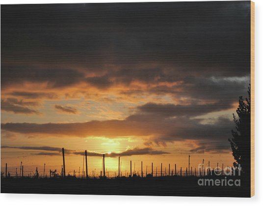 Sunset On The Vineyards Wood Print