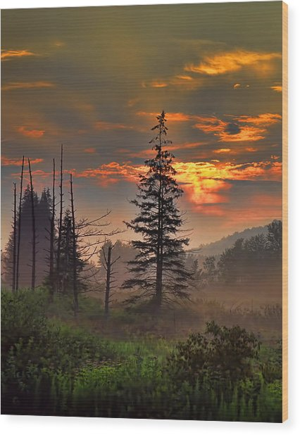Sunset Pine Wood Print