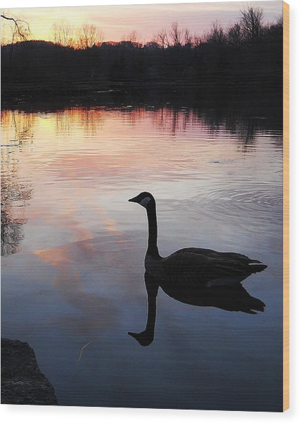 Sunset Serenity Wood Print by Shelley Patten-Forster