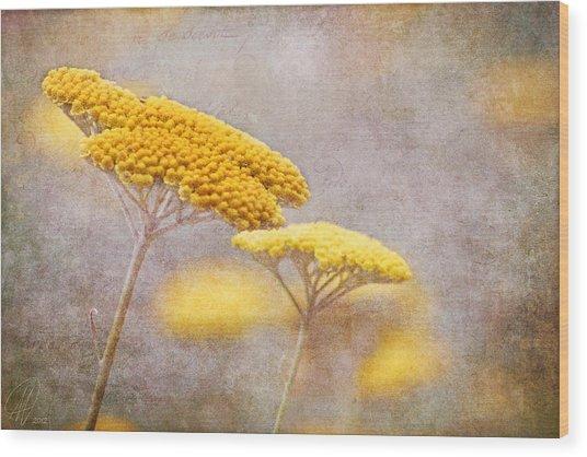 Sunshine Achillea Wood Print
