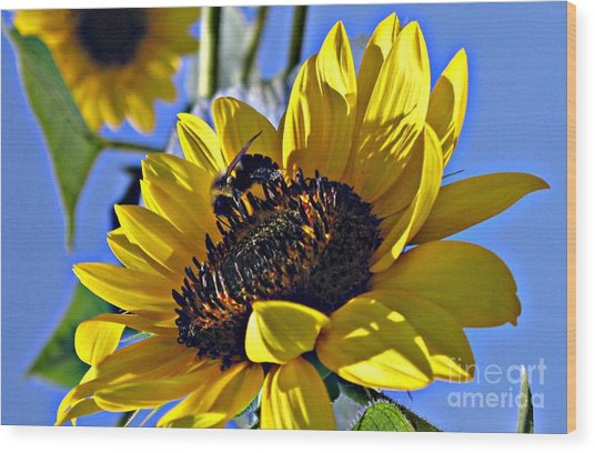 Sunshine Visitor Wood Print