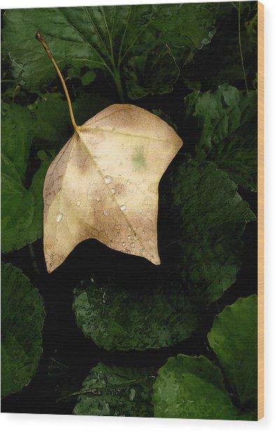 Suspended Leaf Wood Print by Glenn Donze