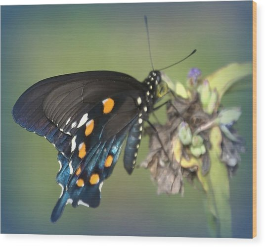 Wood Print featuring the photograph Swallowtail 1 by Judy Hall-Folde