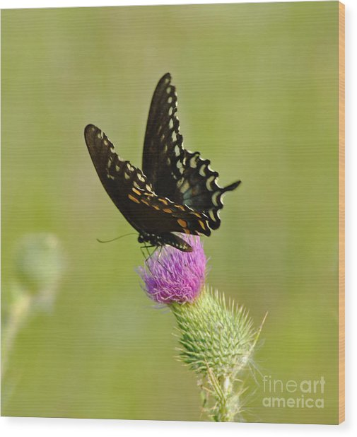 Swallowtail At Work Wood Print by Ginger Harris