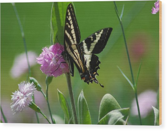 Swallowtail On Pink Wood Print