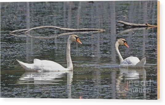 Swans At Sandy Ridge Wood Print by Bob Niederriter