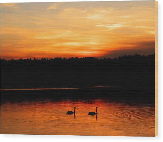 Swans In The Sunset Wood Print