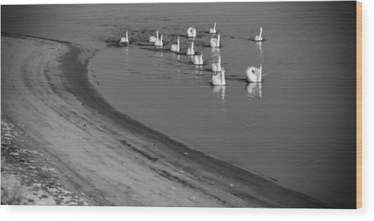 Swans On River Danube Wood Print by Tibor Puski