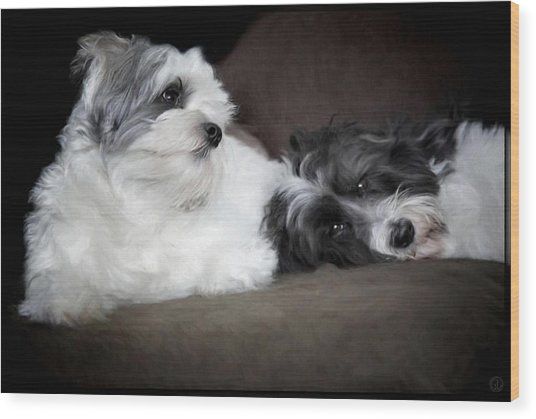 Sweet Couple Wood Print by Gun Legler