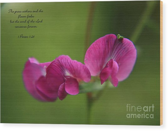 Sweet Pea Flower Wood Print