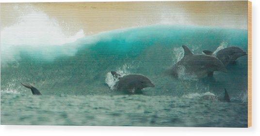 Swim Thru Wood Print