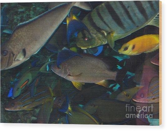 Swimming Fish Wood Print by Andrea Simon