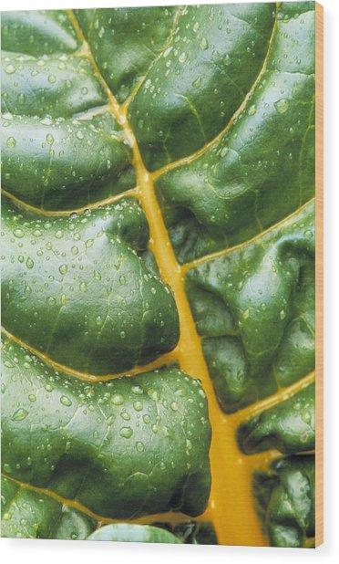 Swiss Chard Leaf Wood Print by Kaj R. Svensson