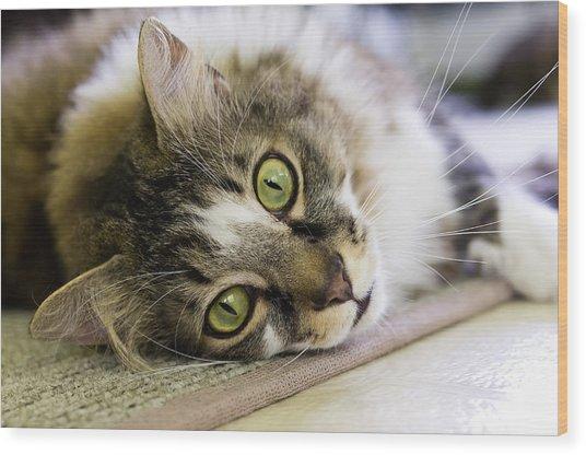 Tabby Cat Looking At Camera Wood Print